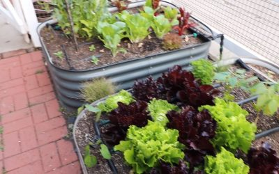 Growing Herbs: Avoid these 5 mistakes