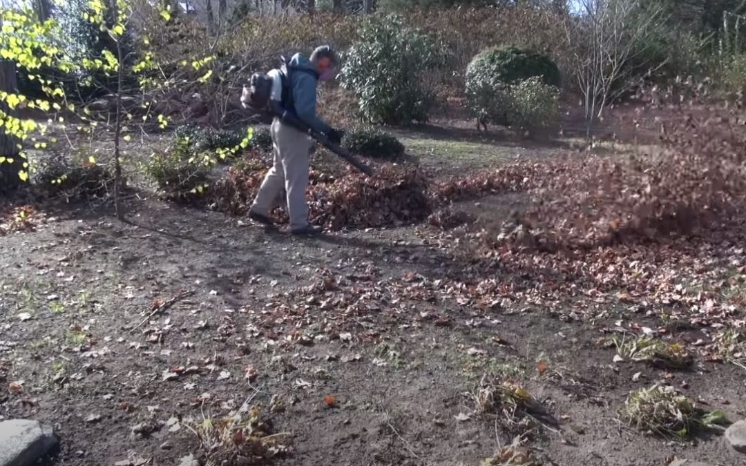 Disposing of leaves in an environmentally friendly way: the best tips